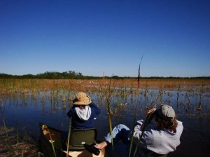 Birding,Everglades ,tours,national park,