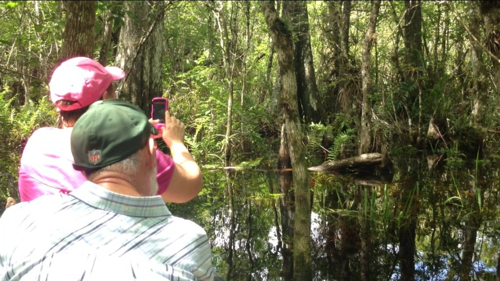 Cypresss swamp tour