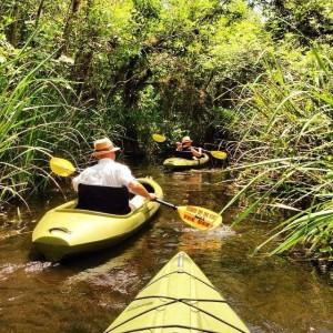 Everglades Kayak Rentals
