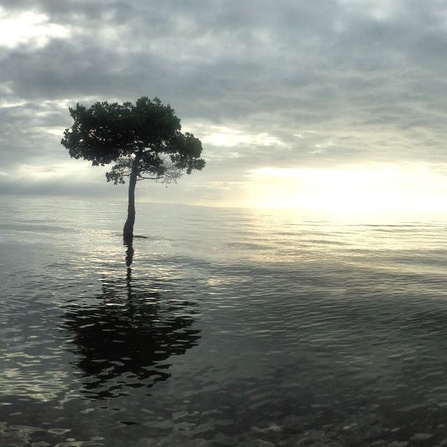#shealy #iphone #photography #everglades #nature #photo