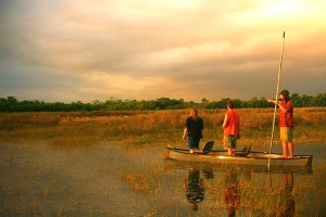 Tour in the Big Cypress National Preserve